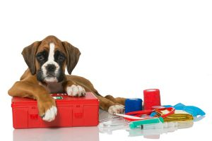 puppy with first aid kit