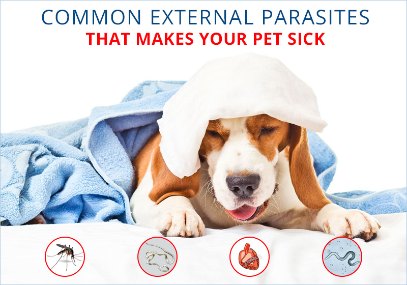Parasites That Makes Your Pet Sick