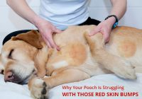 Dog With Red Itchy Skin Bumps