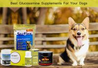 glucosamine supplements for dogs