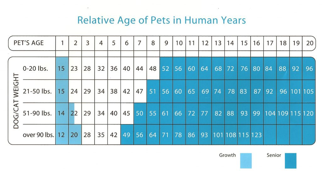 Know your dog age