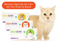 Bravecto-Spot-On-for-Cats