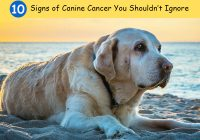 Canine-Cancer-Signs-Symptoms