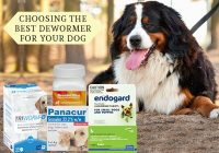 dewormer-for-dogs