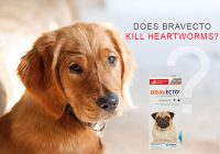 a-dog-with-a-pack-of-bravecto-beside-him-asking-if-bravecto-kills-heartworm