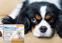 FLEA TREATMENTS IN DOGS