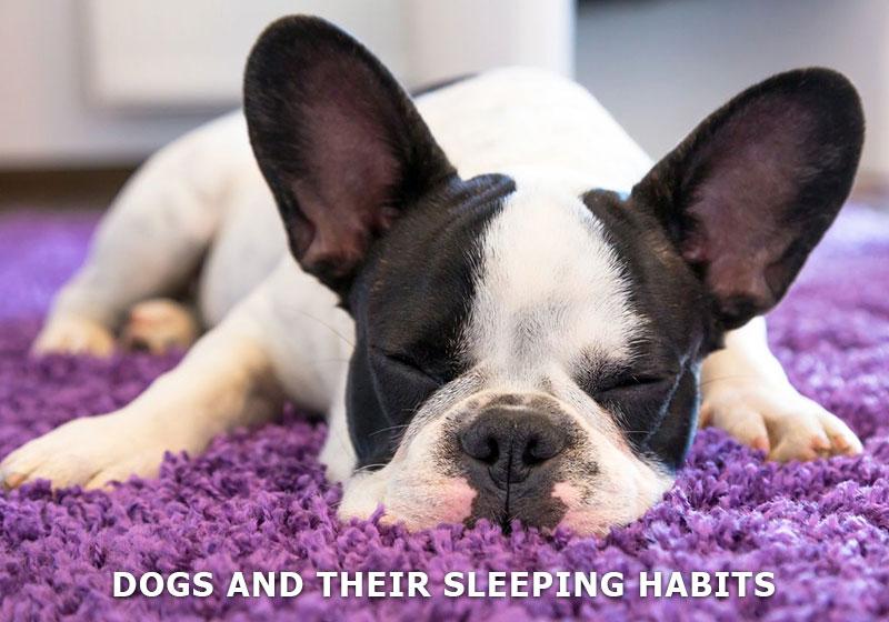 dog-and-sleep