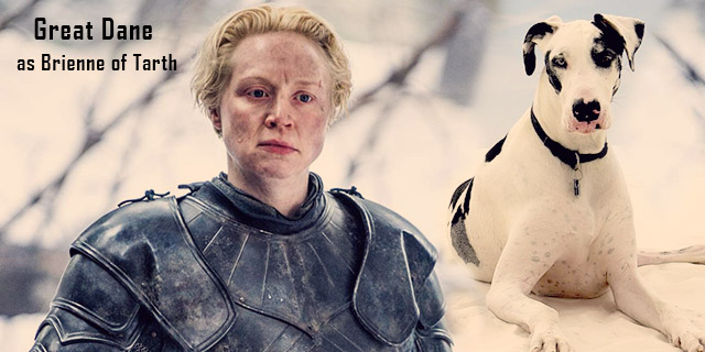 Great-Dane-as-Brienne-of-Tarth