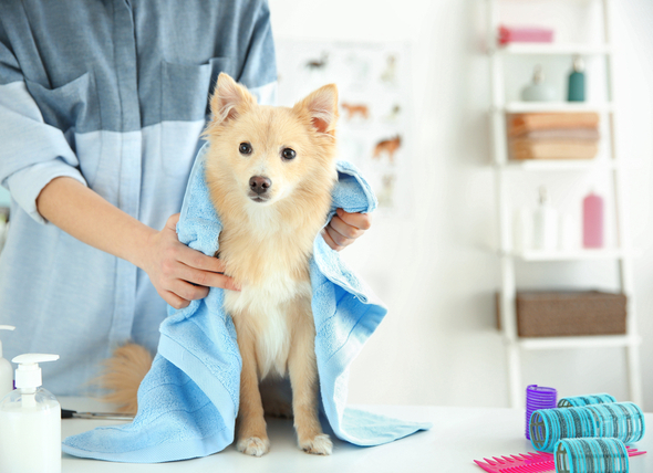 dog-grooming-session