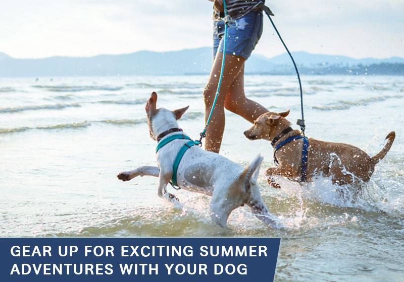 Exciting Summer Adventures with Your Dog