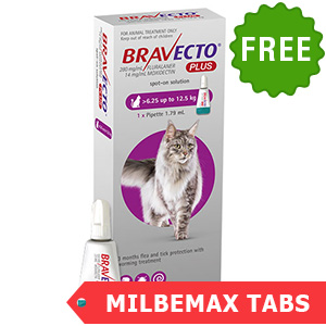 Bravecto Plus for cat