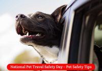 National-Pet-Travel-Safety-Day