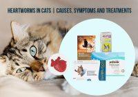 How do cats get Heartworms