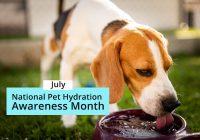National Pet Hydration Awareness Month