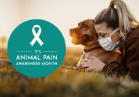 THINGS TO DO DURING 'Animal Pain Awareness Month'