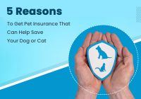 Reasons to Get Pet Insurance