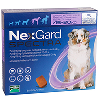 Nexgard Spectra is tastier treatment for a wide range of parasites. This broad spectrum product kills fleas, ticks and different gastrointestinal worms in dogs. Just a single treatment controls varied internal parasitic infestations and prevents heartworm infection as well as its harmful effects. The oral treatment prevents flea and tick infestations as well as controls adult gastrointestinal nematodes including roundworms, hookworms and whipworms.