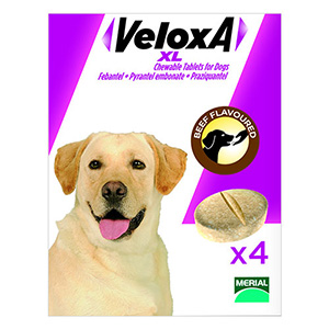 veloxa-chew-tabs-large-dog.jpg